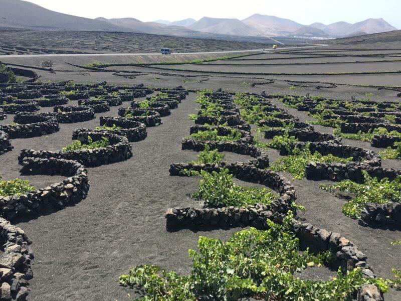 Vinos of Lanzarote