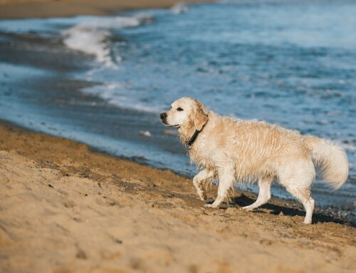 Beaches for dogs in Lanzarote