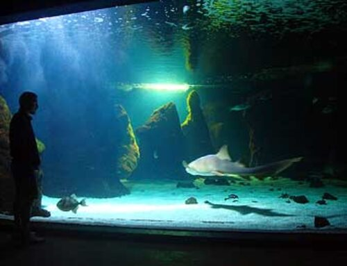 Lanzarote Aquarium: the perfect place for the entire family