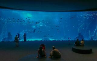 Acuarium Poema del Mar