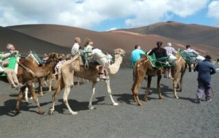 camel ride in Lanzarote