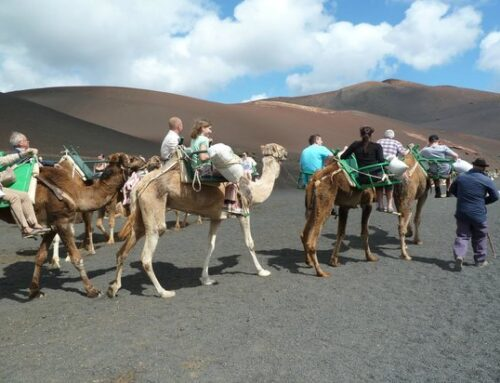 A camel ride in Lanzarote