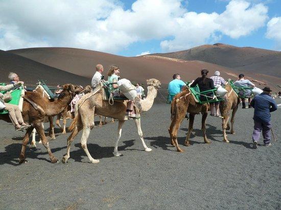 camel ride in Lanzarote