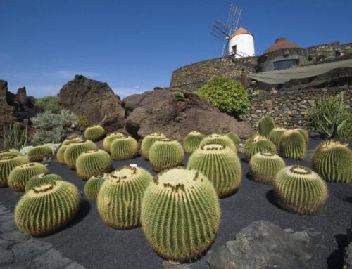 Jardín de Cactus en Lanzarote